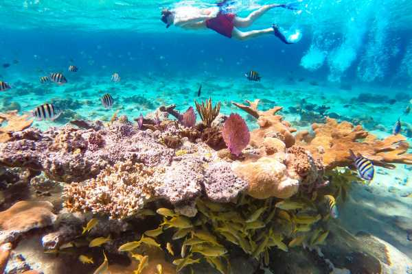 Pearl Island Bahamas Beach Escape incl. Lunch & Snorkel Adventure