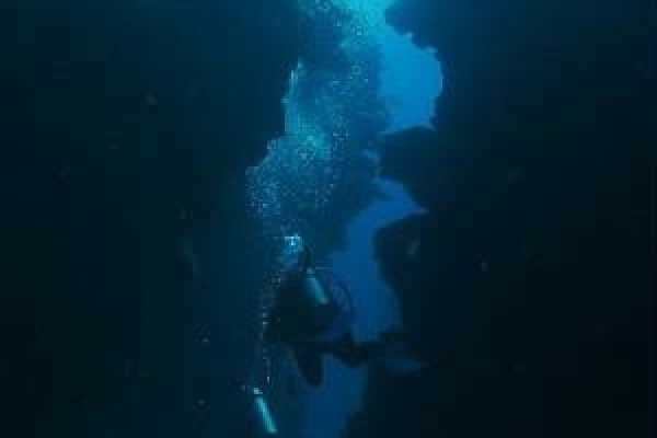Coral Divers Belize Diving