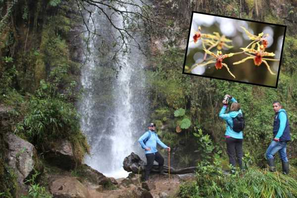 Andes Ecotours Cloud Forest & Waterfall Hike