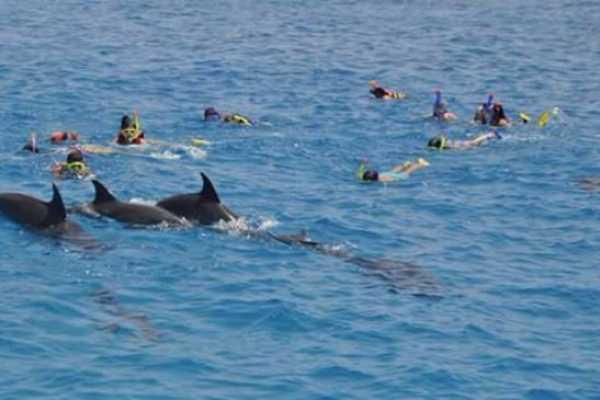 Excursies Egypte Dolphin house snorkeling trip Hurghada