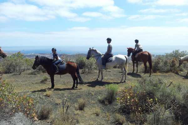 Hipica Canaria Ruta de 1 hora a caballo: Vulcanica