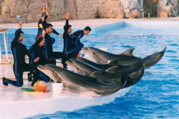 Excursies Egypte spectacle de dauphins avec transfert depuis Hurghada