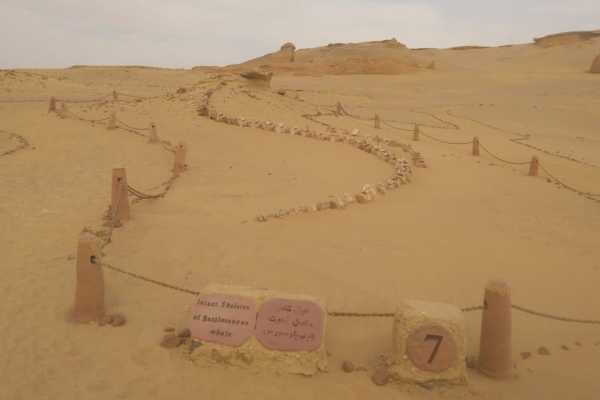 Marsa alam tours Wadi Al Hitan Valley of whales Overnight Trip from Cairo