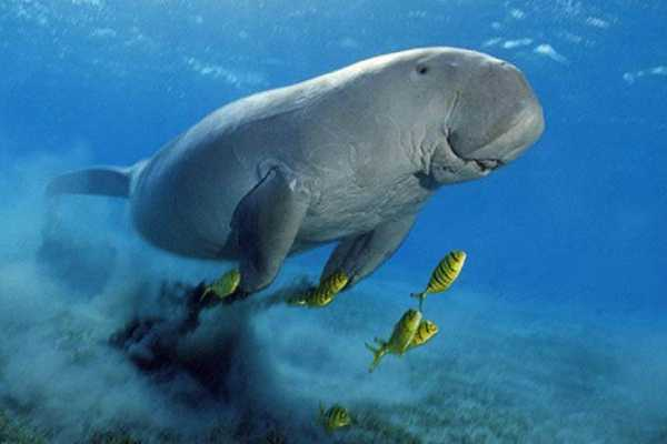 Excursies Egypte Abu Dabbab Dugong Snorkeling Trip From Hurghada