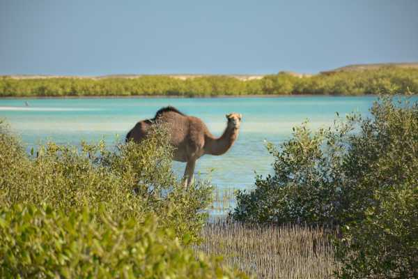 Excursies Egypte SHALATEEN TOUR FROM MARSA ALAM