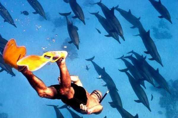 Excursies Egypte Overnight Snorkeling Trip At Satayh Dolphin Reef From Port Ghalib