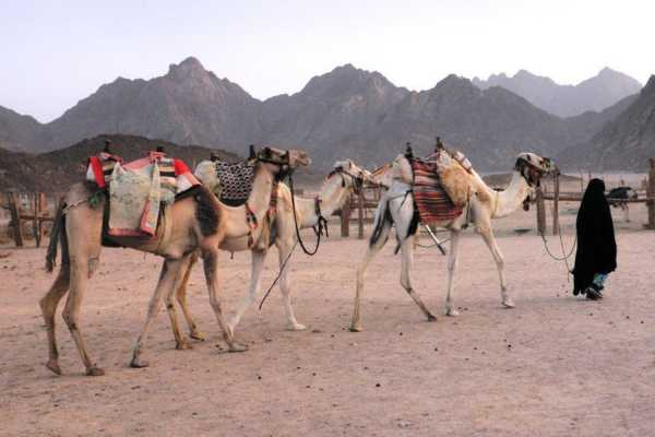 Excursies Egypte Sunset Desert Safari Excursions Quad bike From Port Ghalib