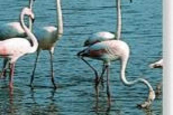 Sequa Tours - Ria Formosa Boat Tours Bird Watching and Historical Tour