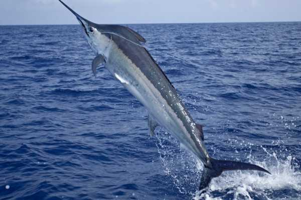 Panoramic Panama (SNF03) DEEP SEA FISHING