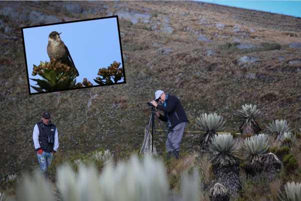 Birdwatching: Sumapaz Páramo