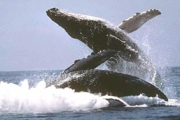 Tour Samana With Terry PUNTA CANA EXCURSION: Famous Kim Beddall of Whale Samana Whales+Cayo Levantado Island - Santo Domingo-Puerto Plata-La Romana-Bayahibe
