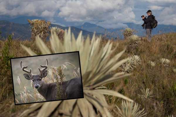 Andes Ecotours Chingaza Wildlife Safari