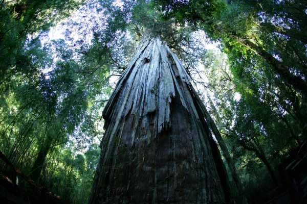 Bosque de Alerces Milenarios