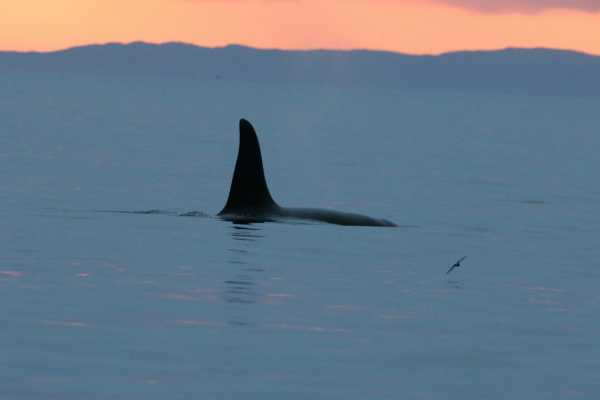 4 hour Ultimate Orca 1 tour, from Gairloch