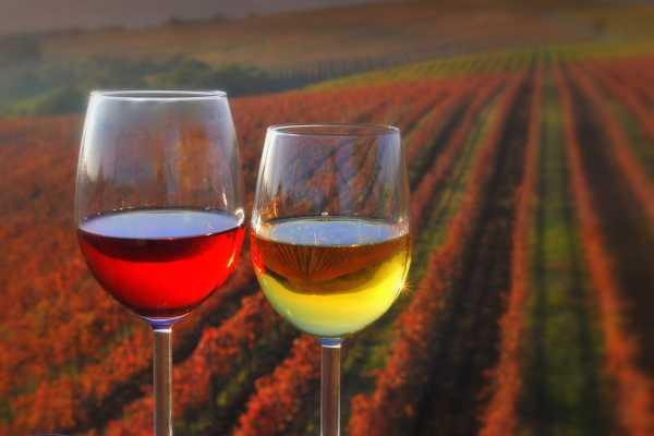 Ride around Tour dei vini