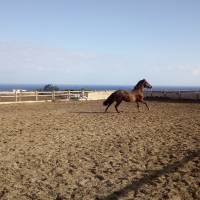 Hipica Canaria Moments of freedom