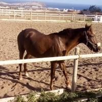 Hipica Canaria Moments de liberté