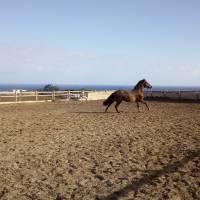 Hipica Canaria Momentos de libertad