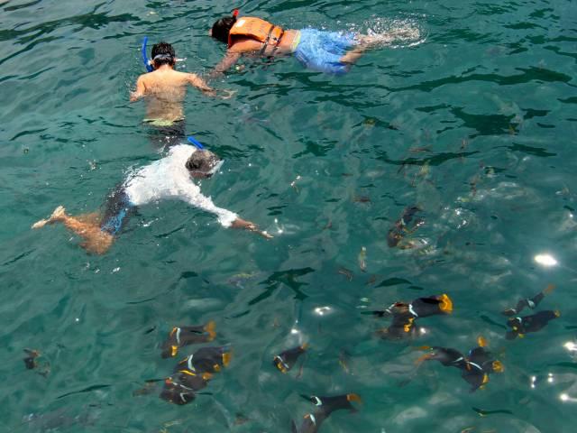 PALO SANTO TRAVEL TOUR ISLA DE LA PLATA