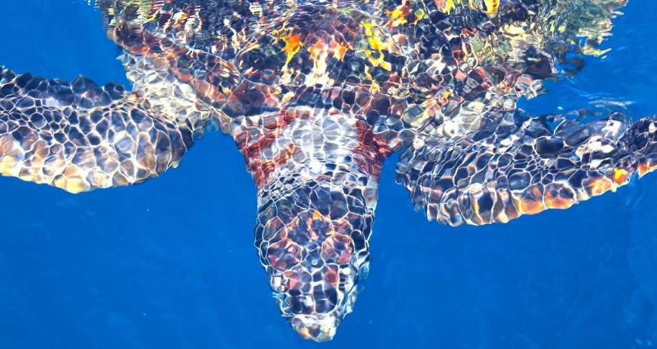 Schnorchel, Meeresschildkröten