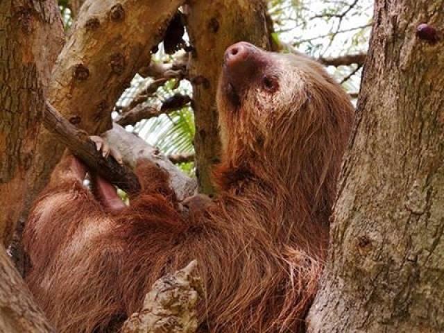 CongoCanopy.com Congo Trail Gallery, Guanacaste, Costa Rica