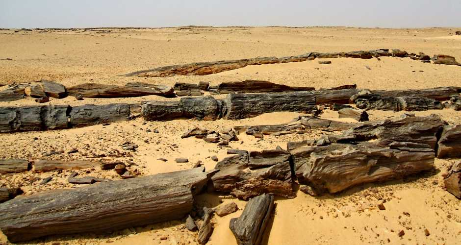 9-THE PETRIFIED FOREST OF FAYOUM