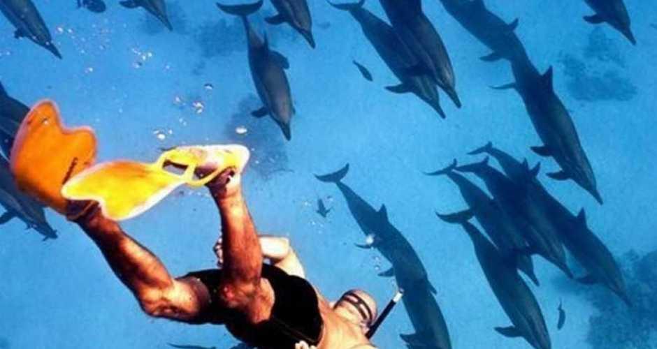 2-Satayh Dolphin Reef,