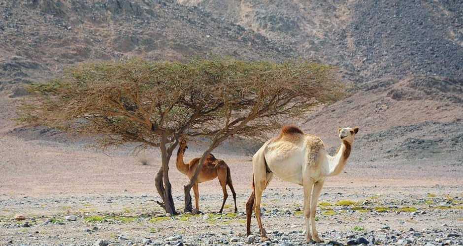 6-Wadi El Gemal ( National Park)