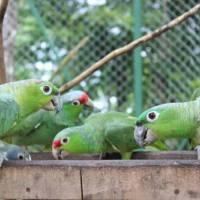 Uvita Information Center Alturas Wildlife Sanctuary