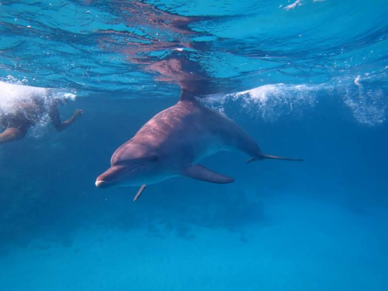 Excursies Egypte Makadi Snorkeling tour et excursions
