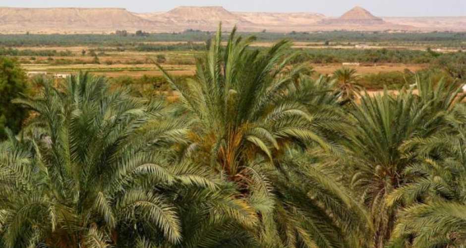 Bawiti