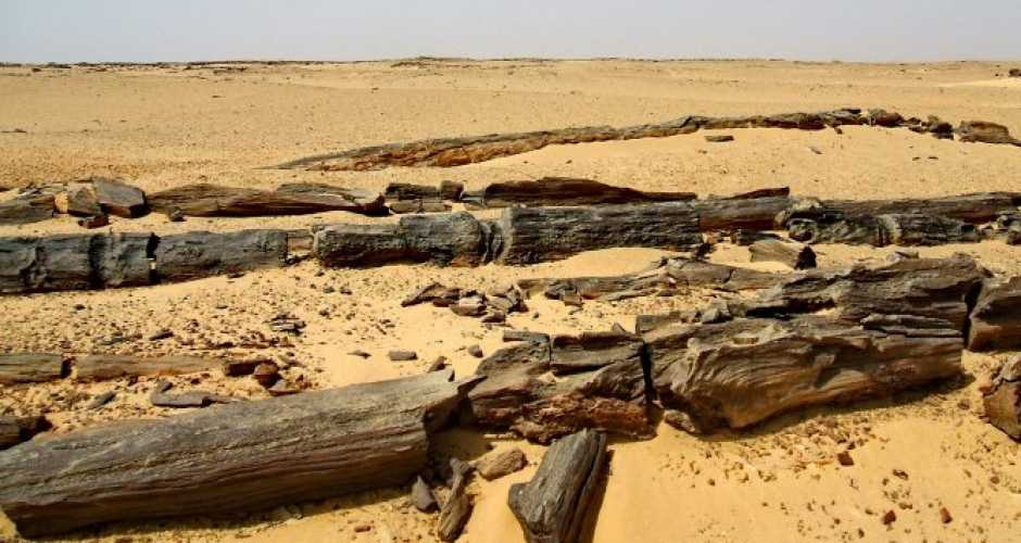 The Petrified forest in Fayoum Oasis