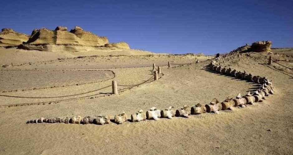 Wadi E Hitan Nationaal Park in Egypte