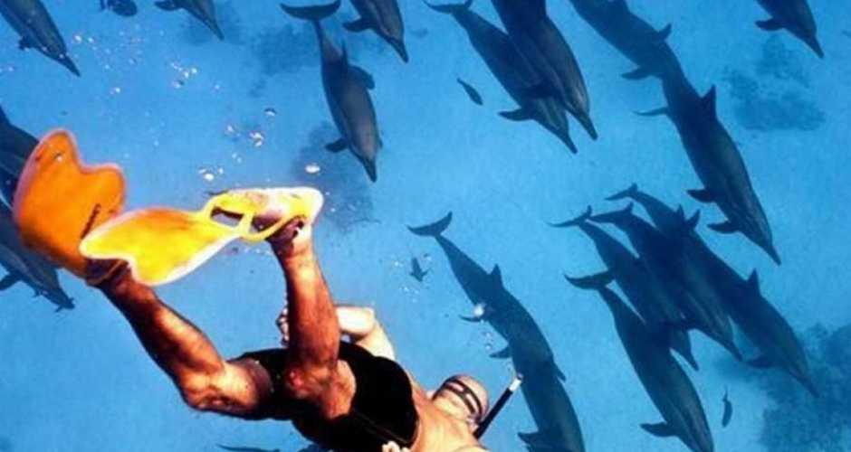 1-Satayh Dolphin Reef National Park