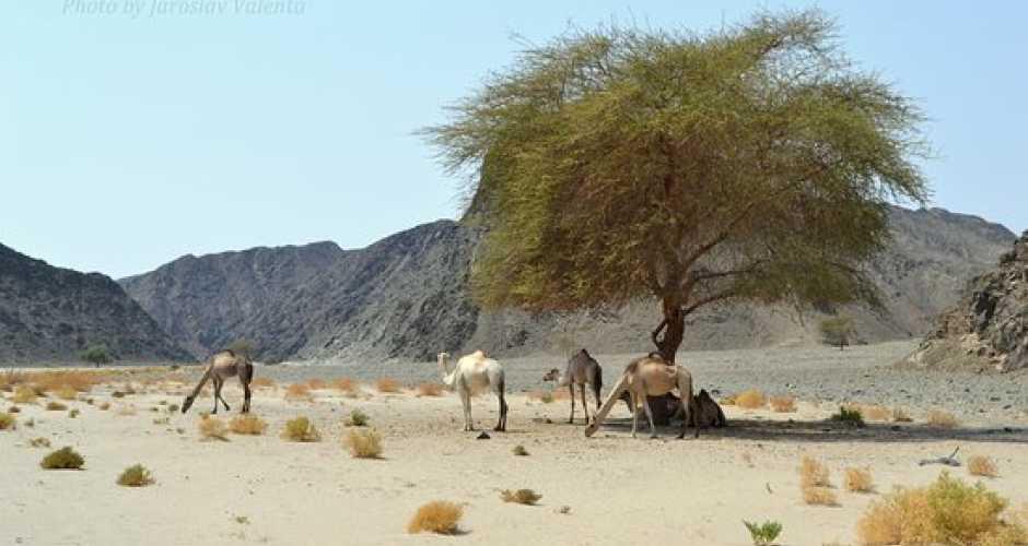7-Wadi El Gemal ( National Park)