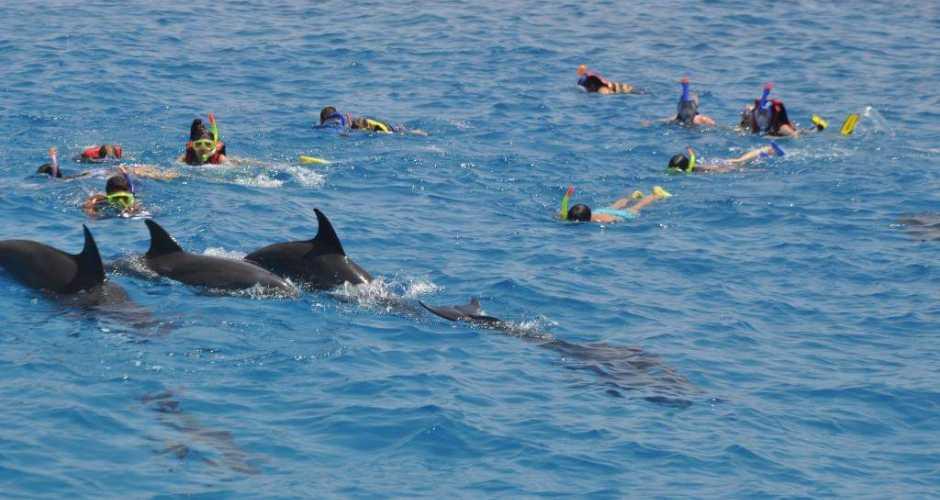 3-Dolfijnen huis
