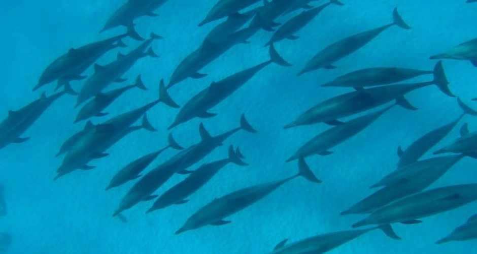 2-Shaab Samadi dolphin house reefs