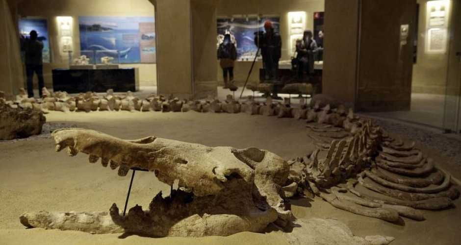 Climate Change museum in Wadi el Hitan