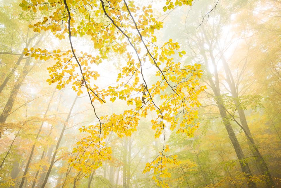 I colori della faggeta in una splendida mattina di Ottobre