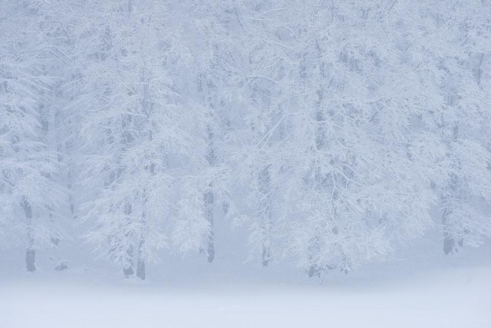 Una recente nevicata ha reso magico l'ambiente di quota.